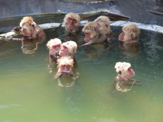 ラドン温泉 効能